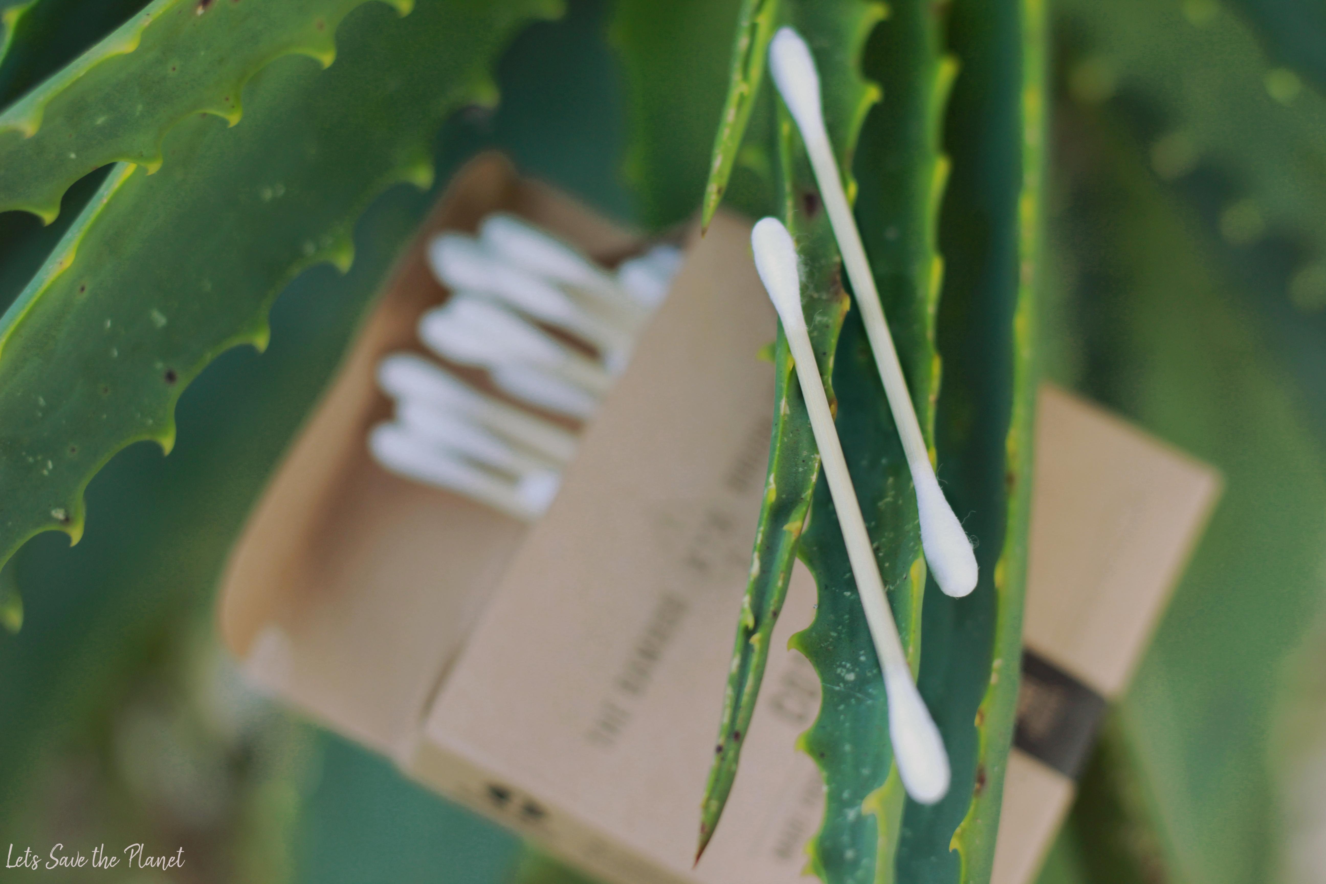 cotonetes com bastão em bambo num cacto de aloevera